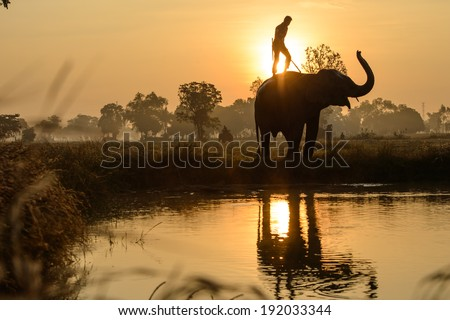 Elephant splashing with water while taking a bath in Taklang village, Thailand - stock photo