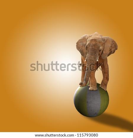 Elephant Standing On Ball On Orange Background - stock photo