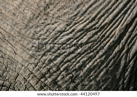 Elephant - Tarangire National Park - Wildlife Reserve in Tanzania, Africa - stock photo