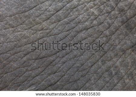 elephant texture - stock photo