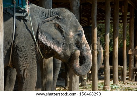 Elephant trekking is one of the most popular tourist attraction in Thailand.