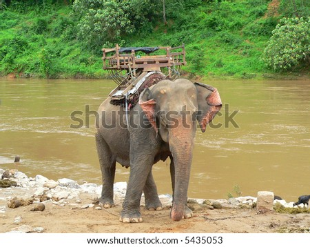 elephant used as a trasport, thailand