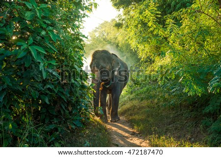 Elephant walk on way in forest