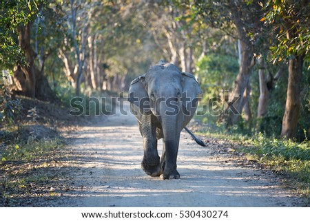 Elephant walking down the road in India