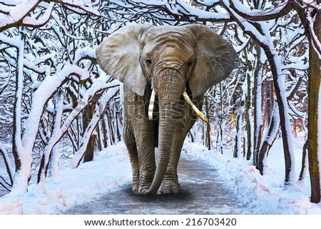 Elephant walking in snowy park scenery - stock photo