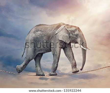 Elephant walking on a tightrope - stock photo