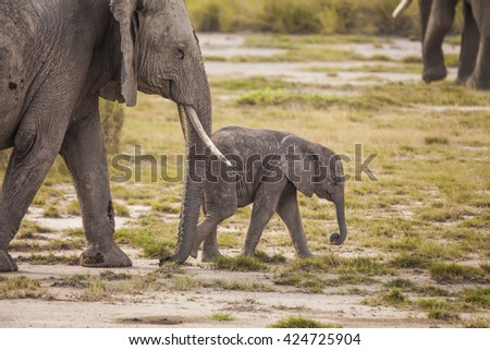 Elephant with baby elephant. Kenya National Park. Africa. - stock photo