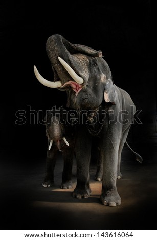 Elephant with Dark Background - stock photo