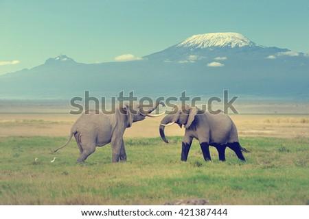 Elephant with Mount Kilimanjaro in the background - stock photo
