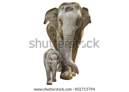 Elephant with the baby on isolated white background. - stock photo