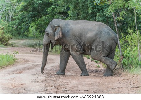 Elephants are the largest land animals today. Take a pregnancy up to 22 months, which is the longest of the land animals of all kinds. Newborn elephant has an average weight of 120 kg.