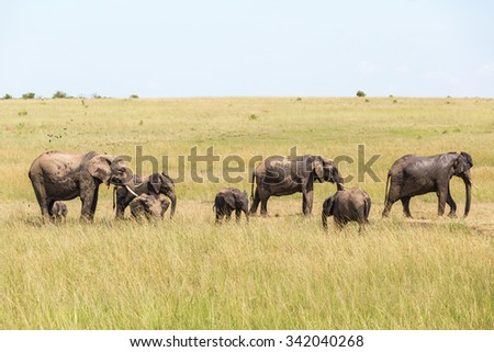 Elephants at a small watering hole on the savanna - stock photo