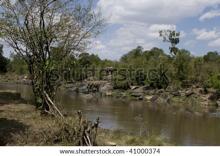 Elephants at Mara River Kenya - stock photo