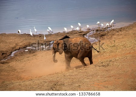 Elephants at the watering hole - stock photo