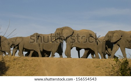 Elephants crossing dam wall, Thornybush Game Reserve,South Africa