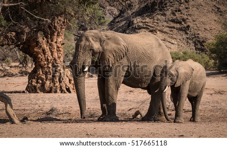 Elephants, Damaraland, Namibia