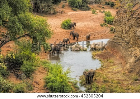 Elephants drinking water at the viewpoint Red Rock in the Kruger national park - stock photo