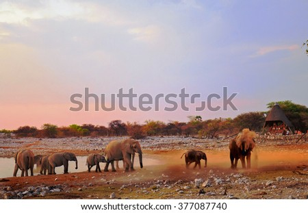 Elephants dusting themselves next to a waterhole in Etosha national park - some motion bur is visible