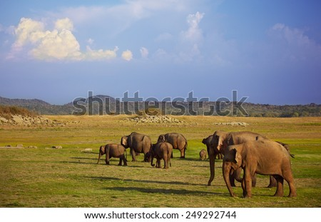Elephants eating grass under the scorching rays of sun - stock photo