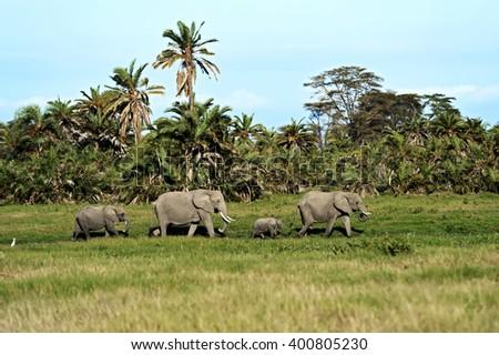 Elephants family on African savanna. Safari in Amboseli - stock photo