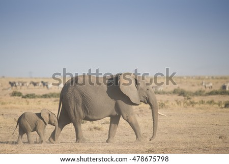 Elephants family on hot dusty african landscape