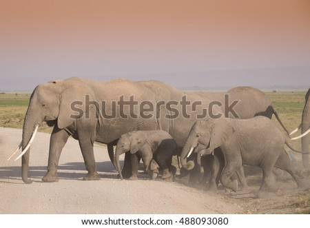 Elephants family on the  dusty ,african road