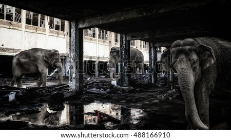 Elephants in Abandoned Buildings. Elephants in a dark. abandoned factory building.