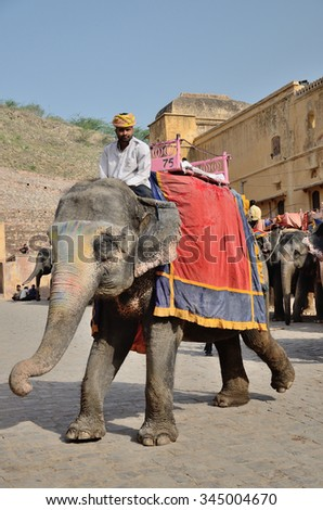 Elephants in India, Fort Amber, Jaipur on April 17, 2015