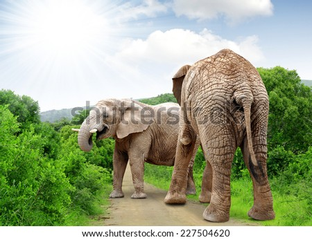 Elephants in Kruger park South Africa - stock photo
