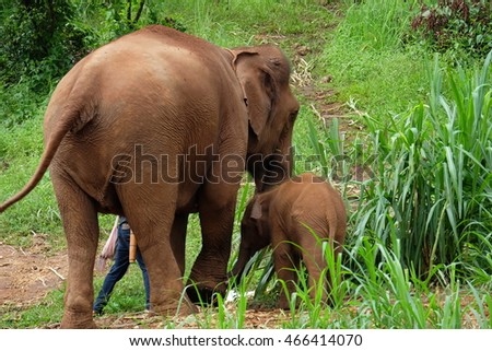 elephants in Thailand,Back side