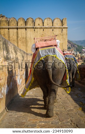 Elephants in the Amber Fort near Jaipur, Rajasthan, India - stock photo
