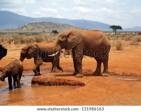 Elephants in Tsavo, Kenya