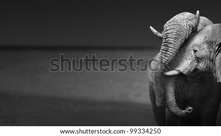 Elephants interacting (Artistic processing) - stock photo