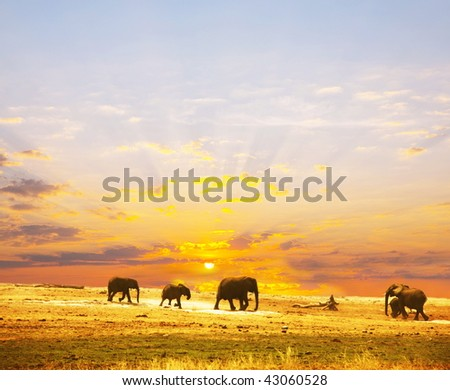 Elephants on sunset
