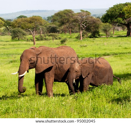 Elephants Tanzania East Africa Serengeti - stock photo