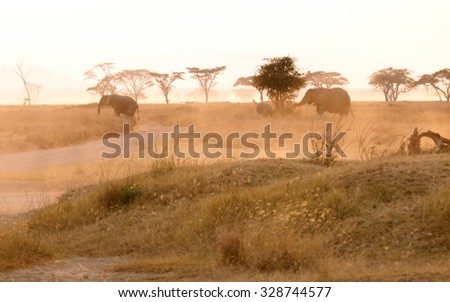 elephants walking in the distance throught the landscape of a african wildpak at sunset