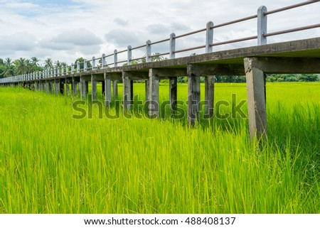 Elevated concrete walkway in green rice field with blue sky and clouds.