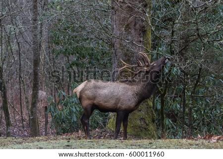 Singles in elk park north carolina