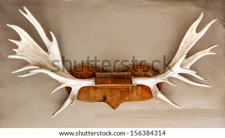Elk / deer antlers mounted on the wall - stock photo