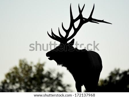 elk valentine's day silhouette - stock photo