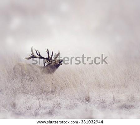 Elk Walking in Tall Grass - stock photo