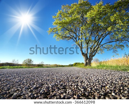 Elm tree on the road side - stock photo