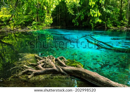 Emerald blue Pool. Krabi, Thailand. Amazing blue water in the beautiful lake at the forest - stock photo