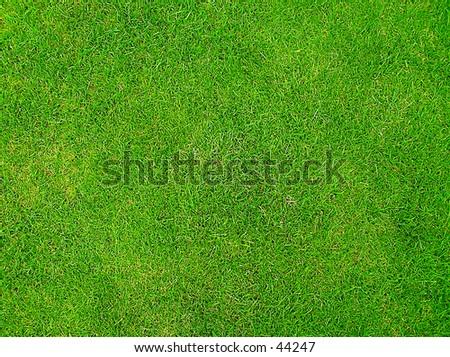 Emerald Grass - stock photo