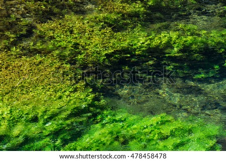 Emerald green flowing river water with seawead, abstract background, river Sourge, Fontaine-de-Vaucluse