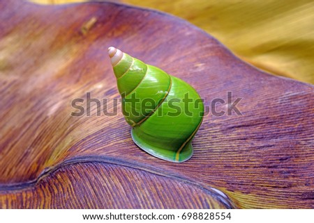 Emerald green snail green tree snail stock photo 698828554 emerald green snail or green tree snail scientific name papustyla pulcherrima from rain sciox Images