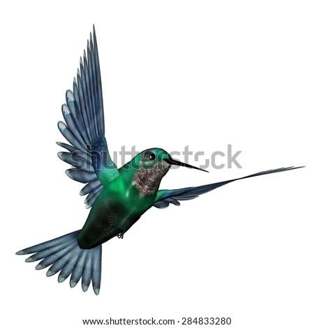 Bee hummingbird flying - photo#28