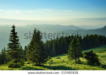 Emerald morning Carpathian Mountains