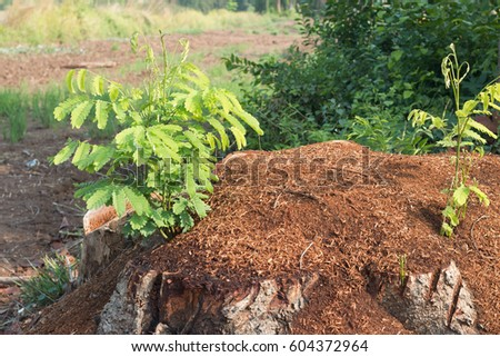 Emerging tree After cutting trees