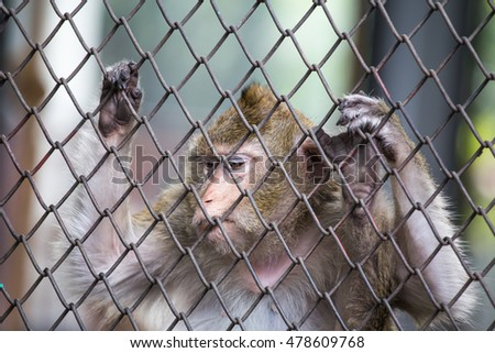 Emotions and life wild monkey in zoo